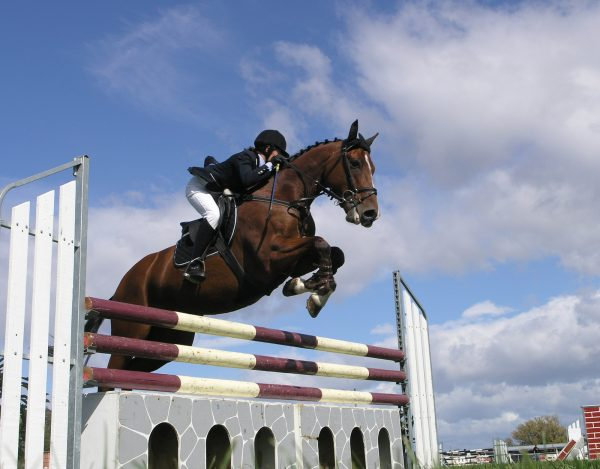 Confident Show Jumping